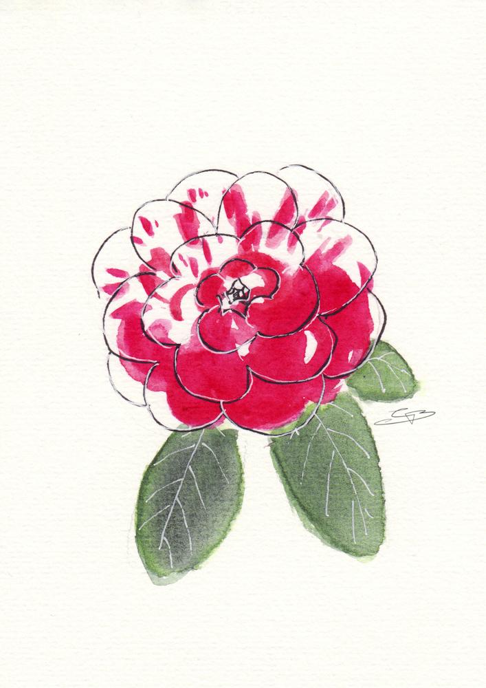 "Camellia ""La Peppermint"""